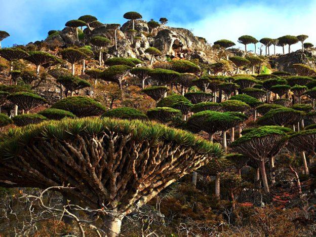 Socotra Island Photo Source: http://travelinnate.com/socotra-island/
