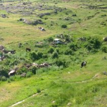 Antarut, Armenia