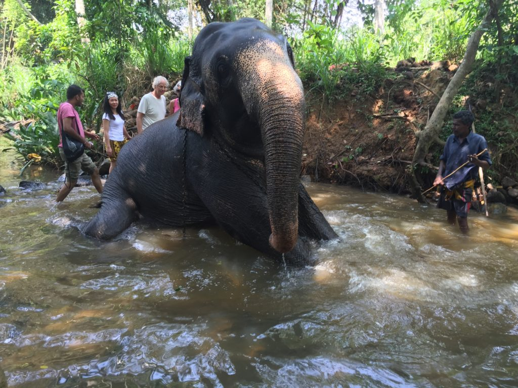 An elephant following the command of a mahout