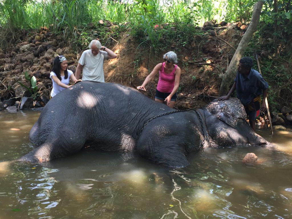 Giving an elephant a bath