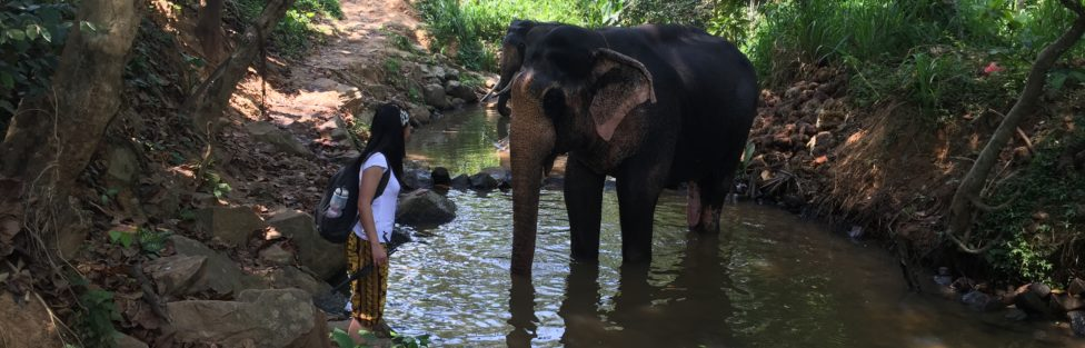 The Elephant, The Mahout and The Dreamer